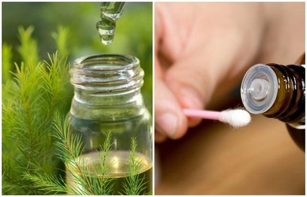 Công dụng của dầu tràm trong làm đẹp da