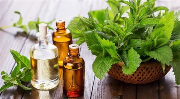 Tinh dầu bạc hà giúp ngăn ngừa tóc gãy rụng
